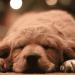 dog gift guide santa cruz